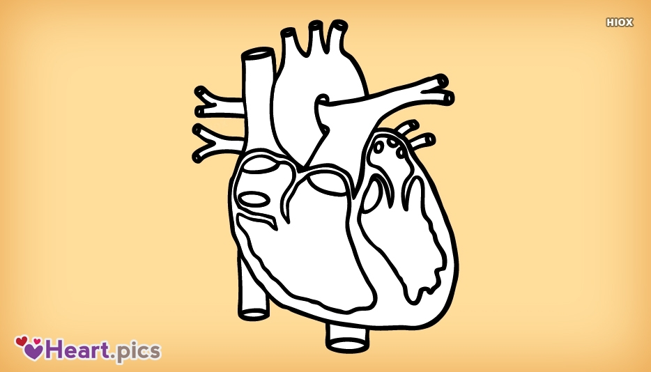 Diagram Love Heart Images, Pictures