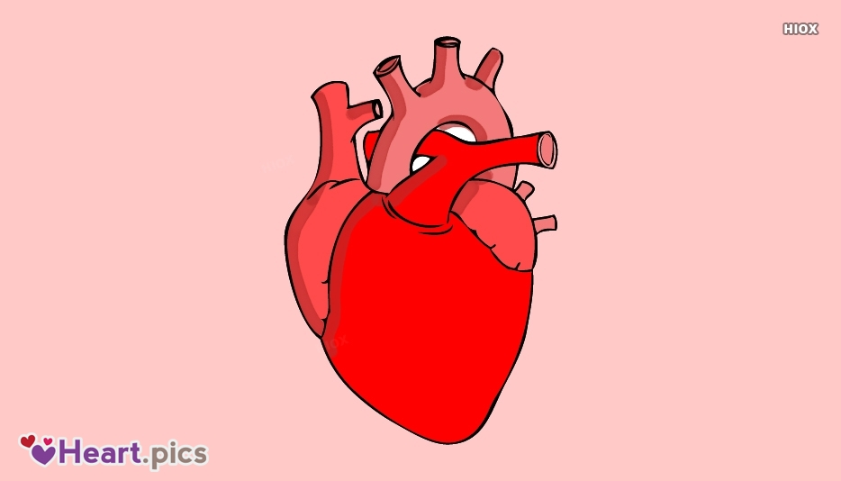 Human Heart Love Heart Images, Pictures