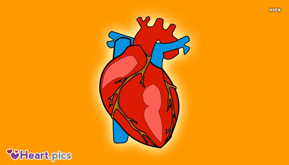 Heart Valve Love Heart Images, Pictures