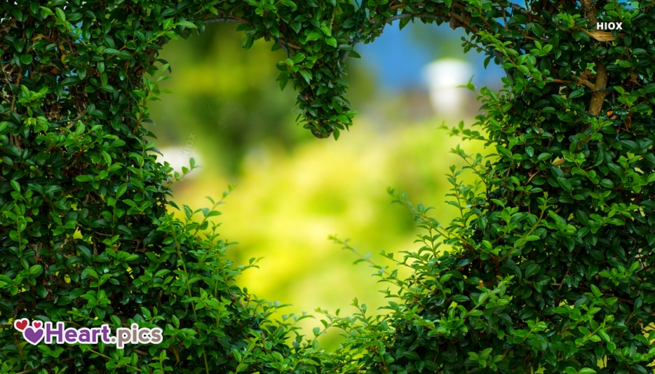 Heart Love Nature