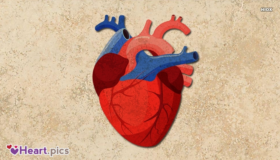 Real Heart Love Heart Images, Pictures