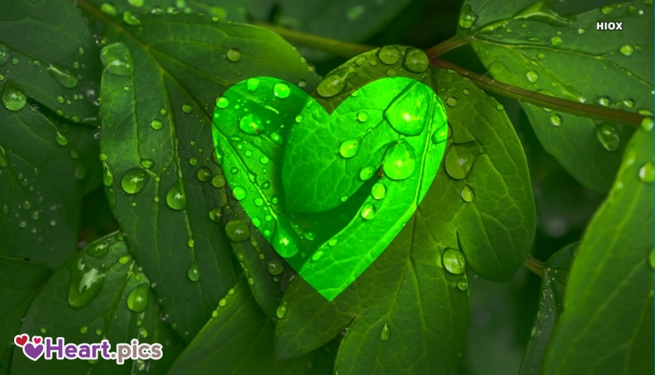 Love Heart Nature