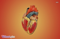 Heart Images Biology
